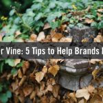 Life After Vine: 5 Tips to Help Brands Move on With Video