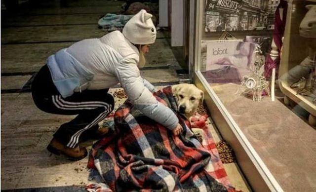 Centro comercial de Turquía abre sus puertas a perros callejeros para protegerlos del frío
