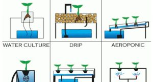Types-of-Hydroponic-Systems-585x390