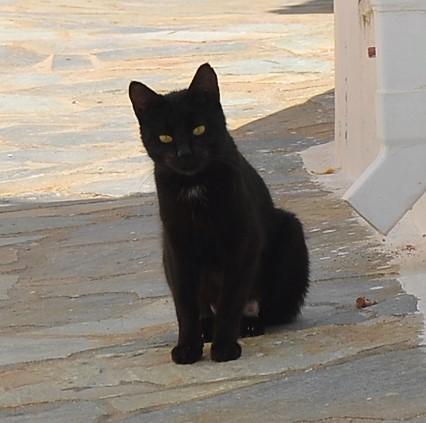 Un joli chat noir.
