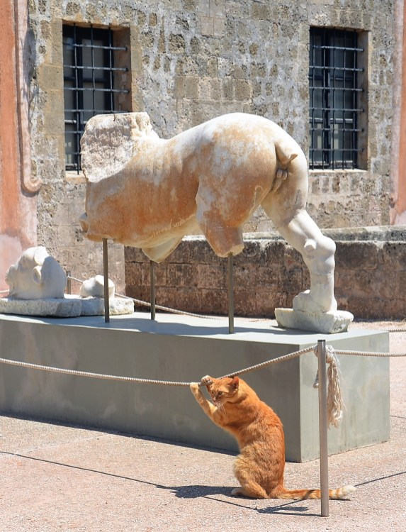 Chat roux (Rhodes°