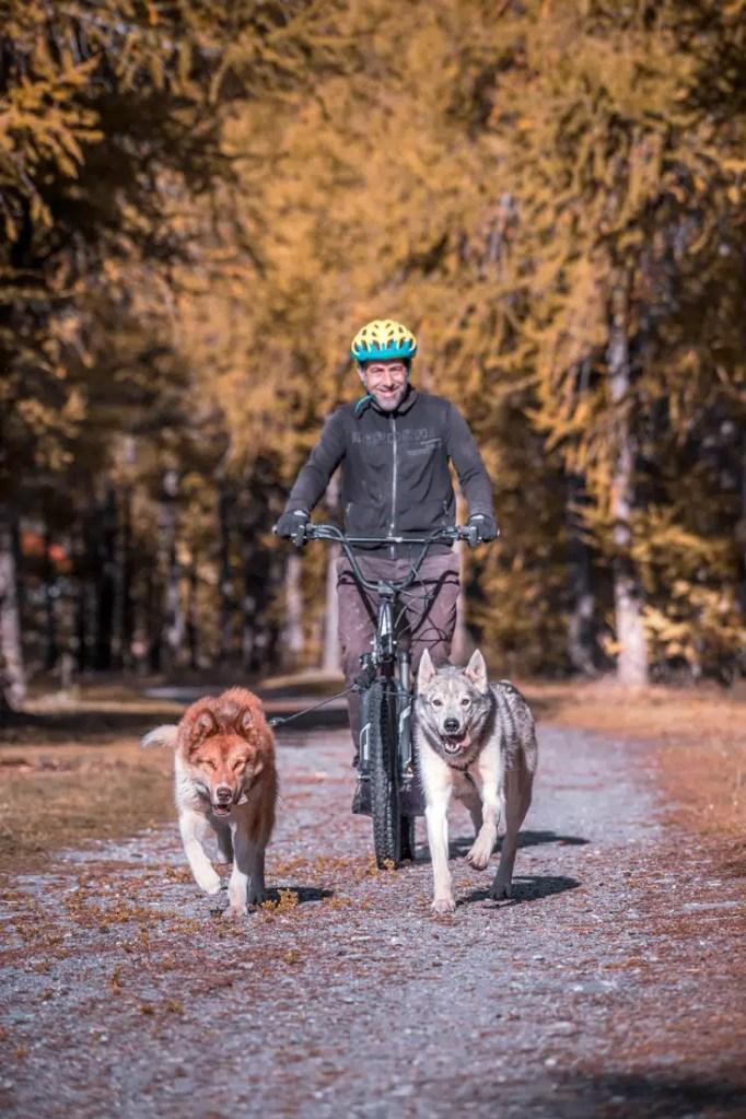 Attelage de 2 chiens nordique en Cani-trottinette