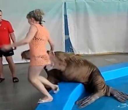 كلب البحر متحرشا