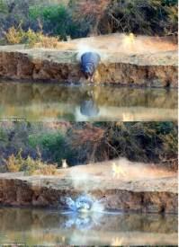 فرس النهر، اسد 8-27-2015 6-40-58 AM.bmp