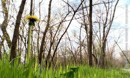 Ապրիլի 13-ին Երևանում շուրջ 7500 ծառ և թուփ կտնկվի
