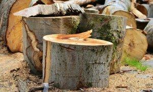Հատվել է 1462 ծառ․ մեղադրանք է առաջադրվել 16 անձի
