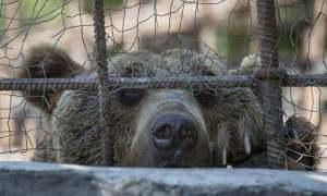 Կենդանաբանական այգում տուբերկուլյոզ հիվանդության հարուցիչներ չեն հայտնաբերվել