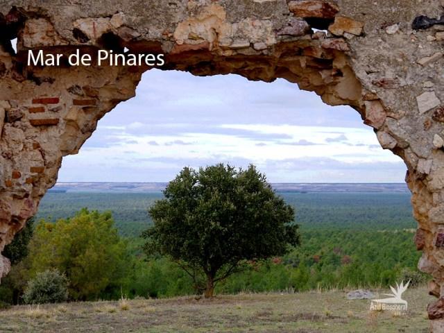 El Mar de Pinares