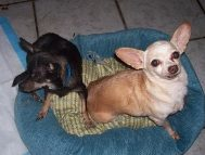 CANDEE AND COOKIE