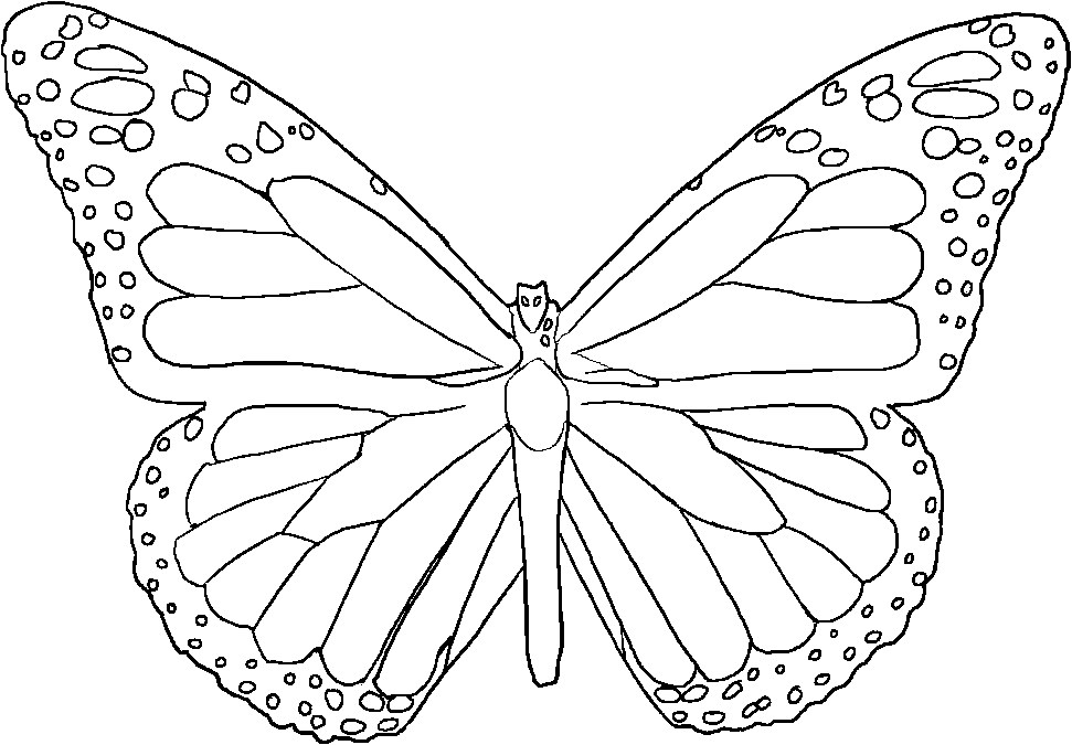 Free Coloring Pages Of Butterfly Symmetry