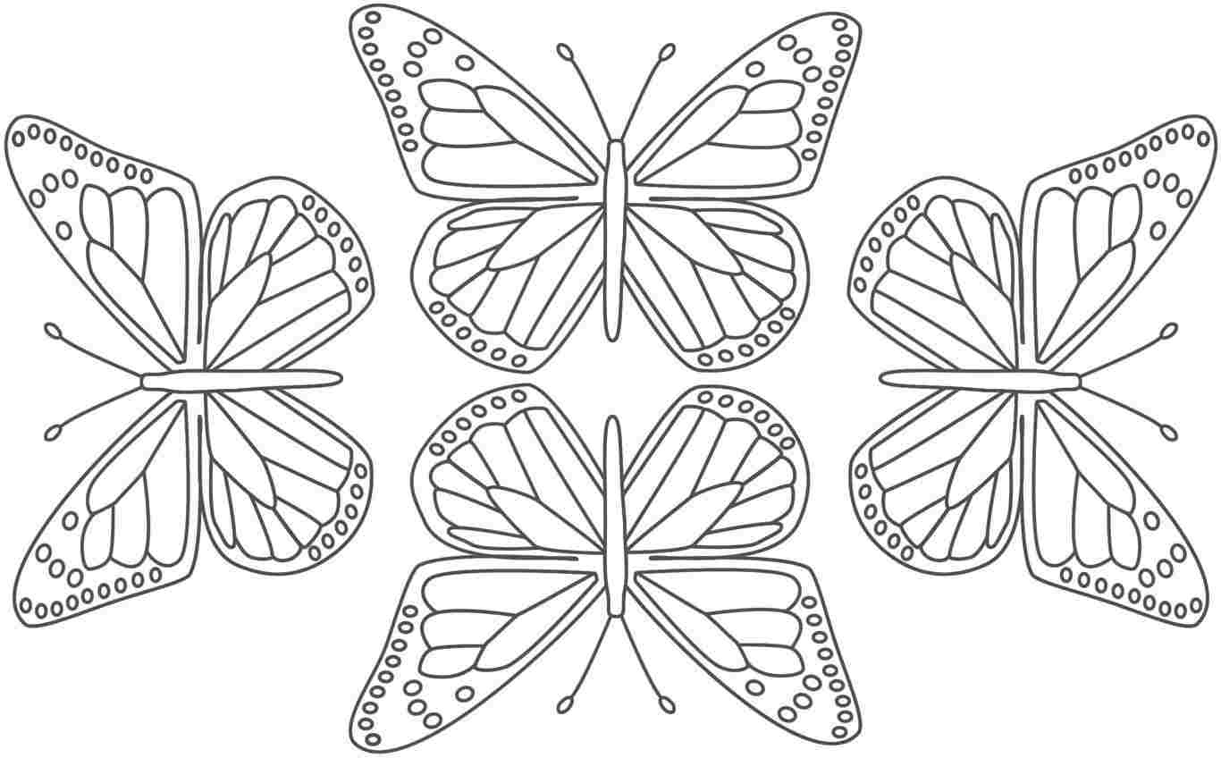 Monarch Butterfly Coloring Page Sketch Coloring Page