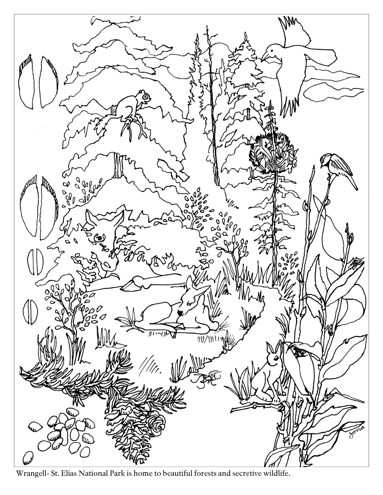 Woodland Animal Coloring Page