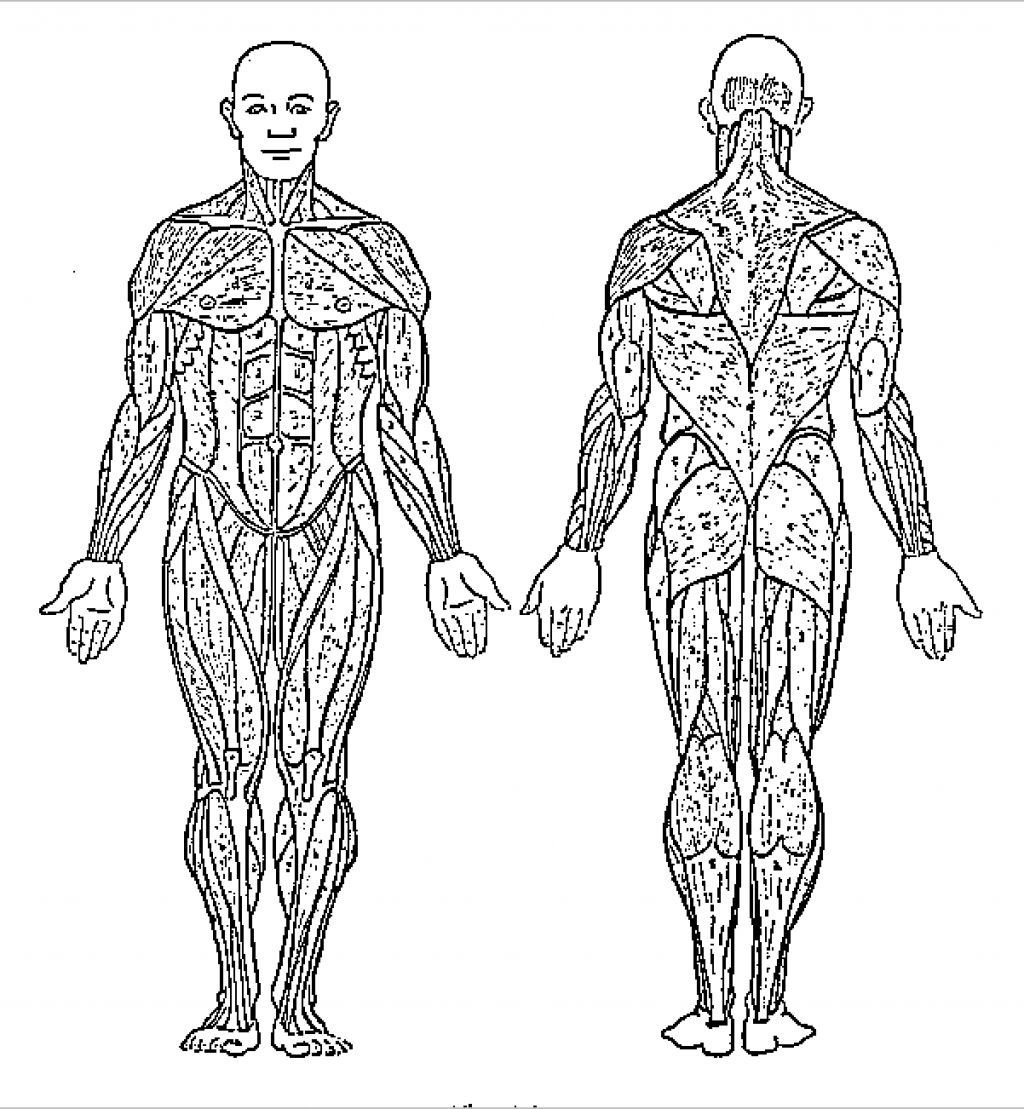 Human Body System Coloring Pages Free Sketch Coloring Page