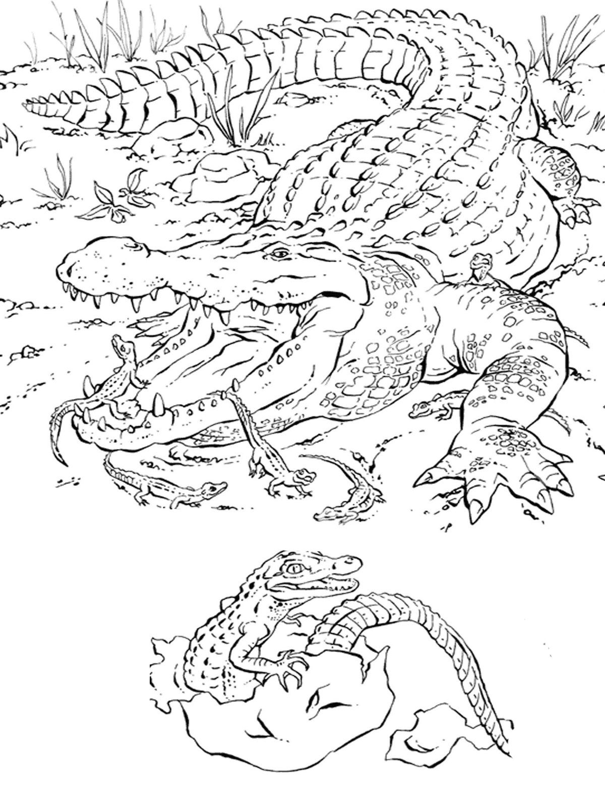Alligator Baby Worksheet