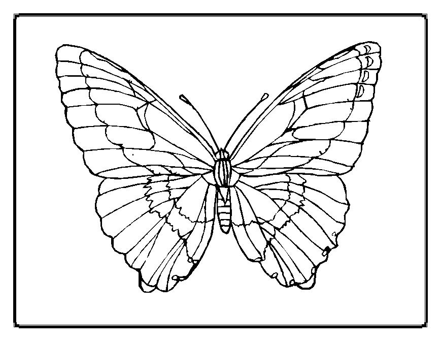 Butterfly Templates To Print AZ Coloring Pages