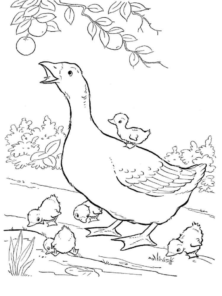 Baby Goose Coloring Page AZ Coloring Pages