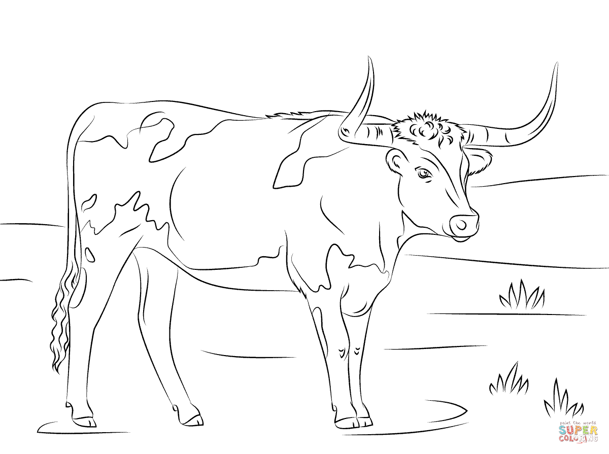 Texas Longhorn Coloring Page
