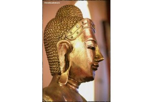 Galeria Azeitão Zen