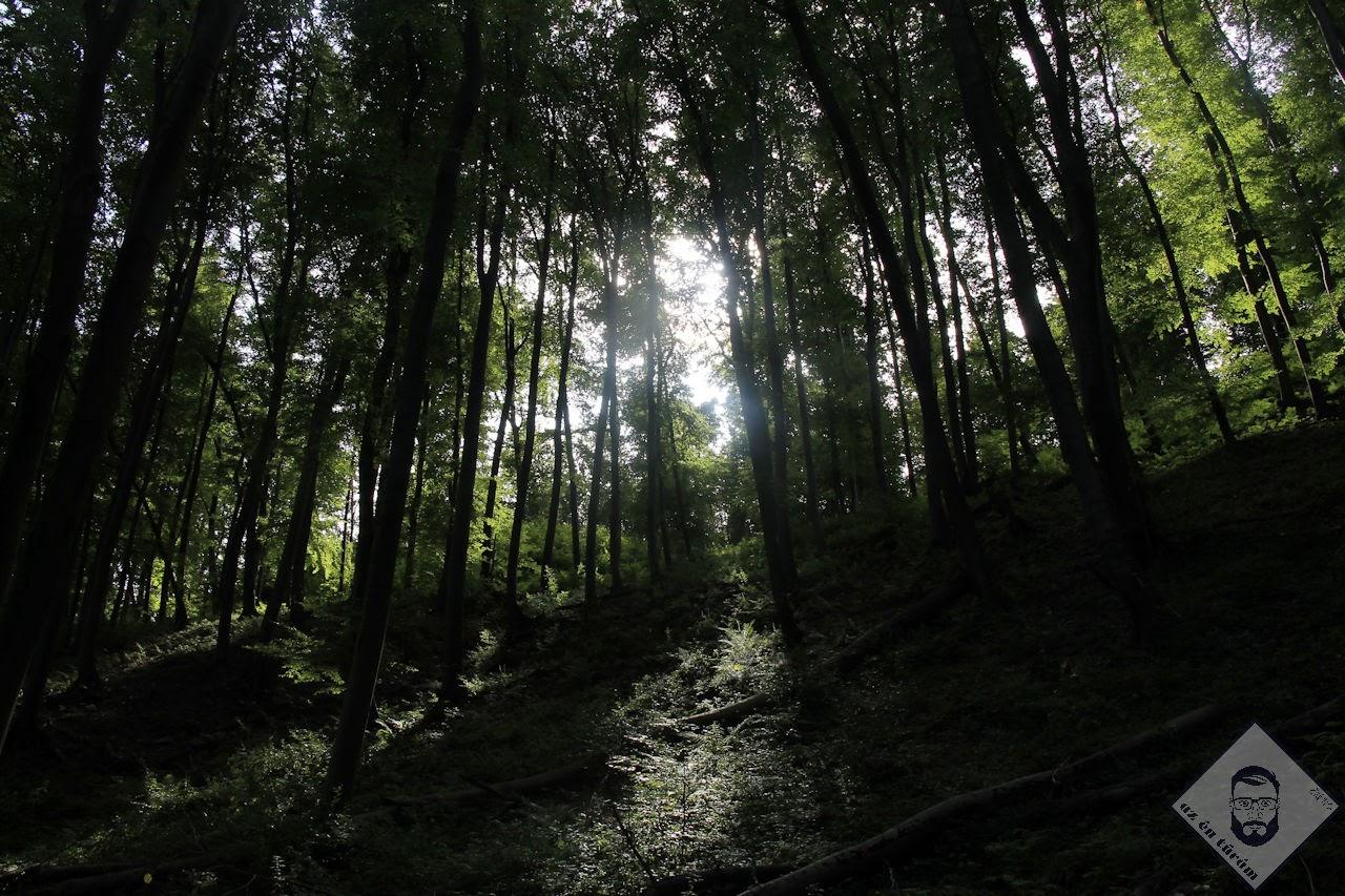 KÉP / Fények a Burok-völgyben