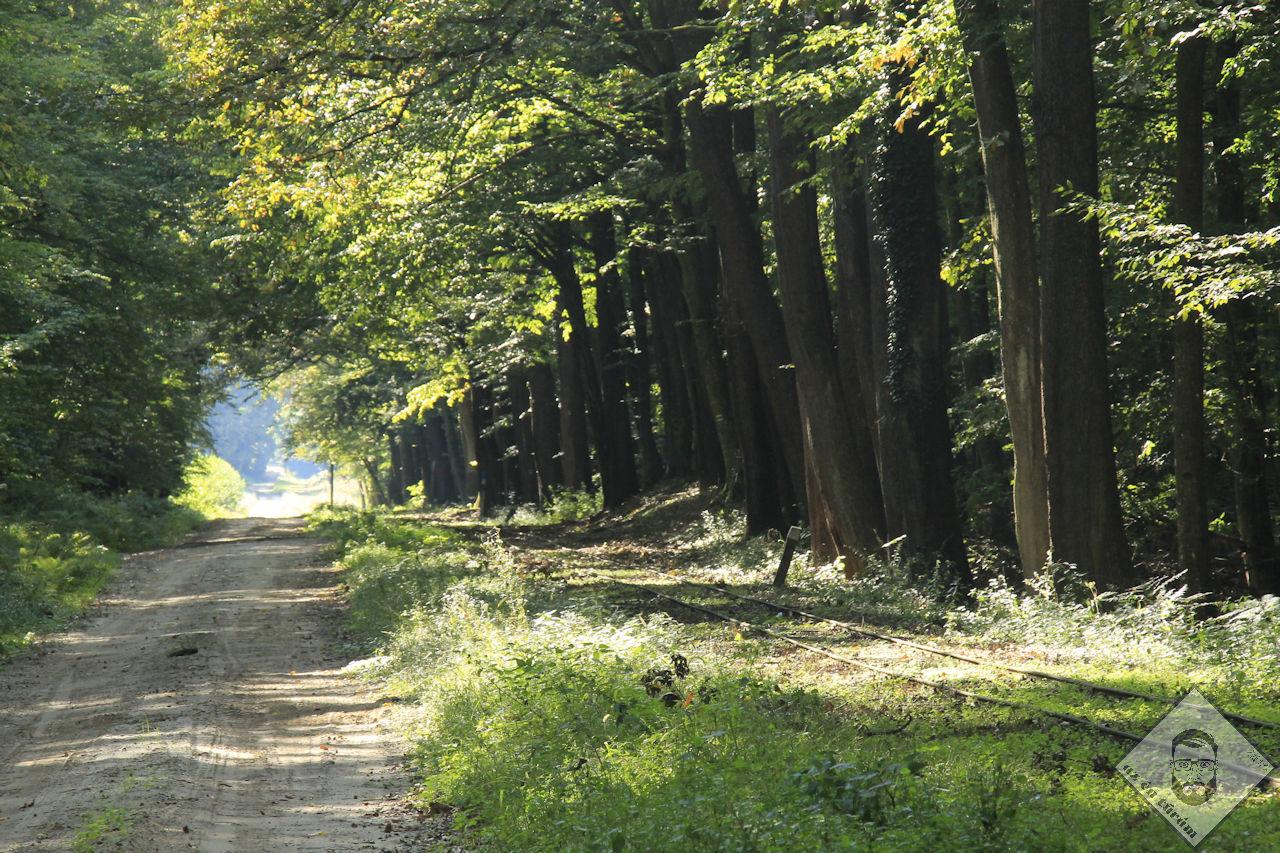 KÉP / Kisvasút mentén