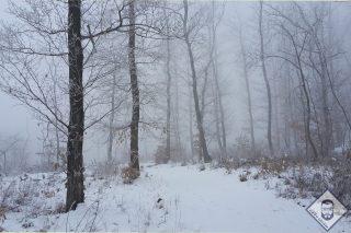 KÉP / Téli erdő (Nagy-Kő-hegy)