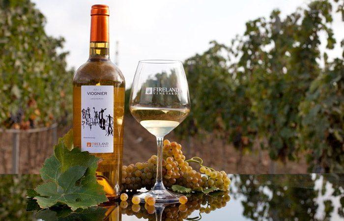 Экскурсия на винодельню + винная дегустация в поселке Новханы
