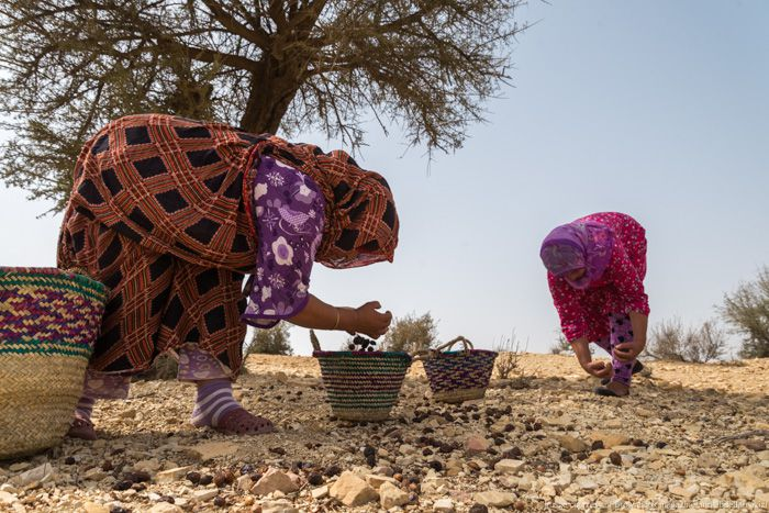 Women collecting Argan