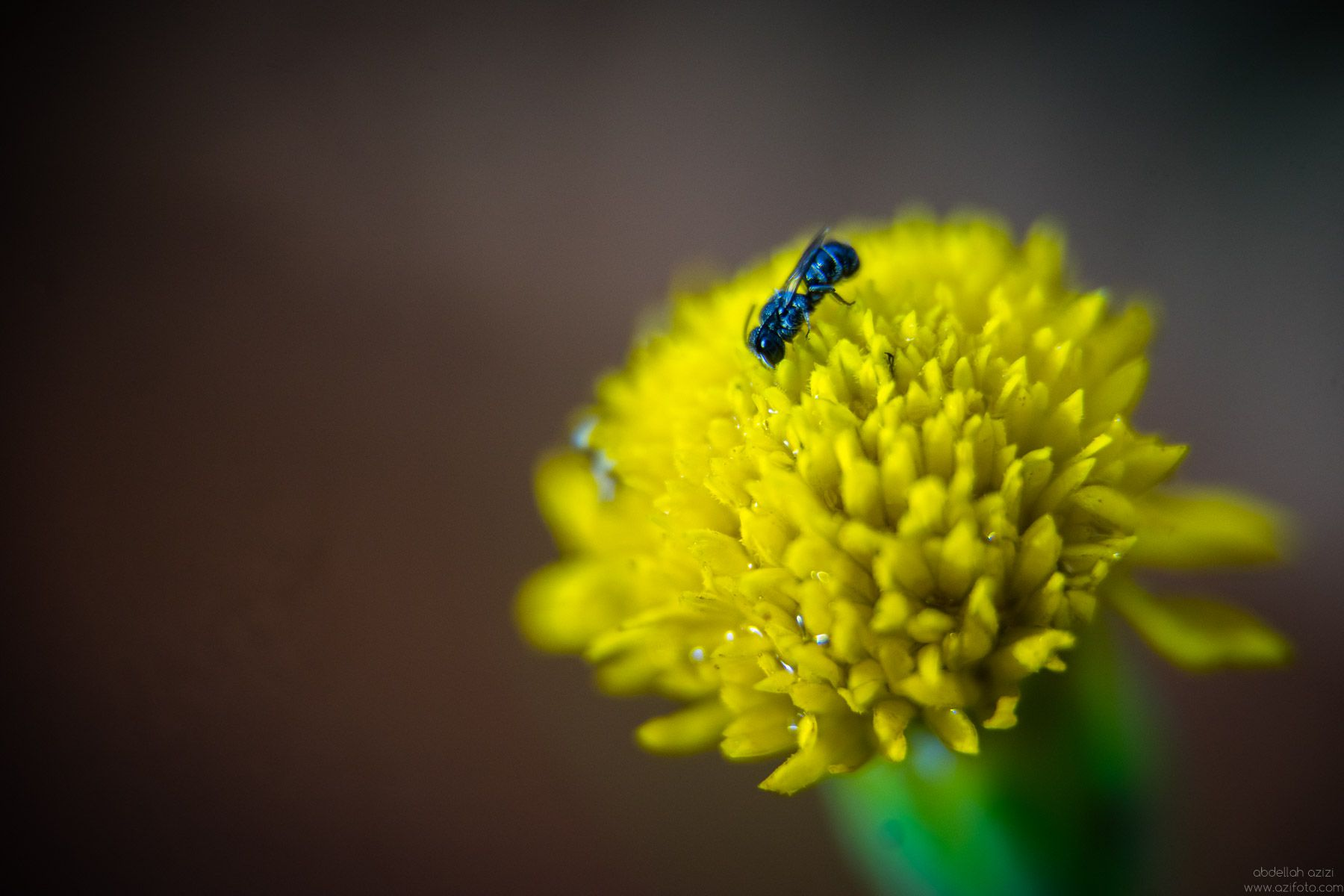Clos up of an insect, abdellah azizi photography
