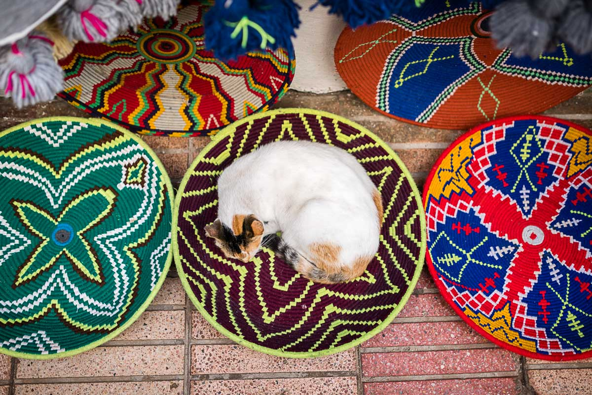 Cat slepping, Essaouira, Morocco