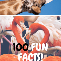 100 Fun Facts//Celebrating My 100th Blog!