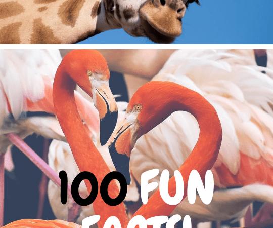 fun facts celebrating my blog