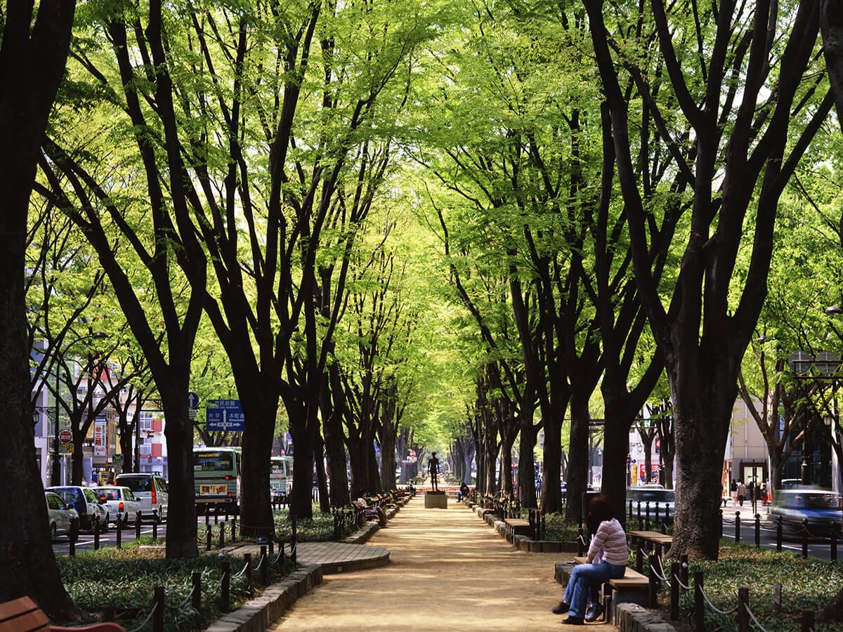 Sendai trees