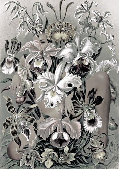 Bloom / Joanna John 2014