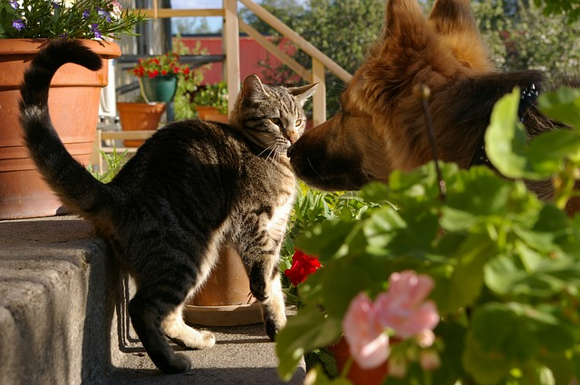 Cat and dog playing - moving with your furry friends