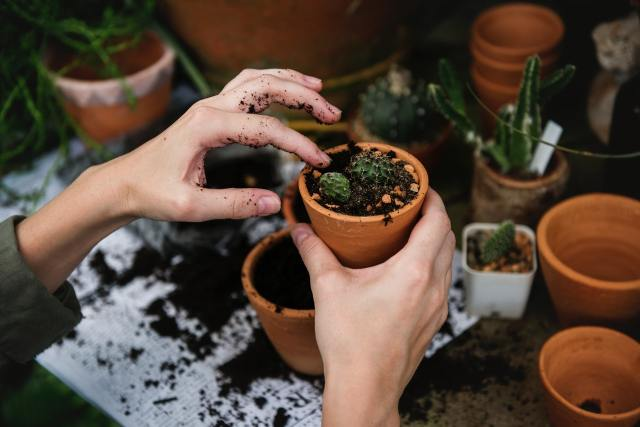 potting plants so it's possible to move your plants