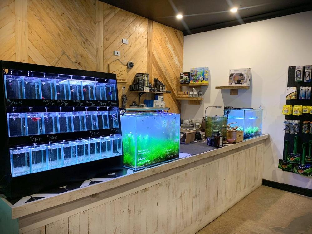 Aztec Aquarium shop counter
