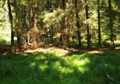 Letní putování po brdských lesích,