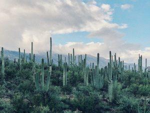 Saguaro in Arizona Landscape Photo by Cash Vickers