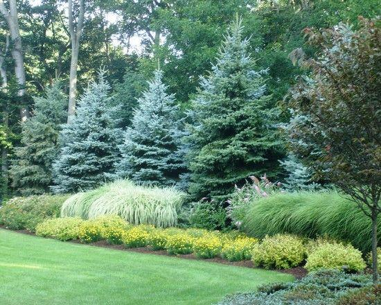 Landscape with large trees and mix shrubs in Poughkeepsie NY