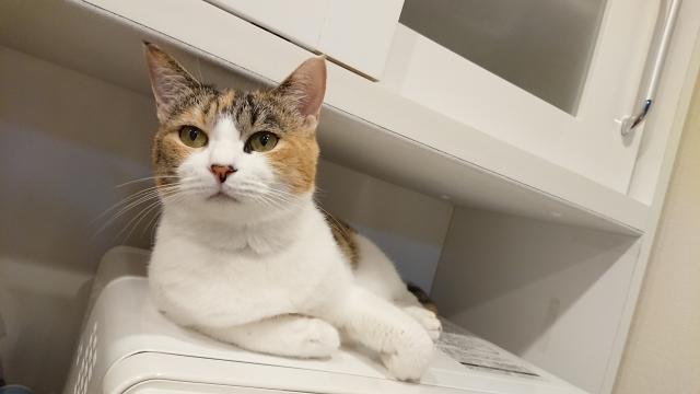 冷蔵庫の上に物を置く