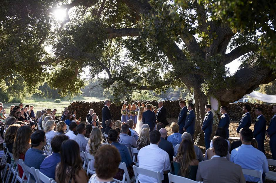 Beautiful golden hour wedding ceremony under a huge oak tree.
