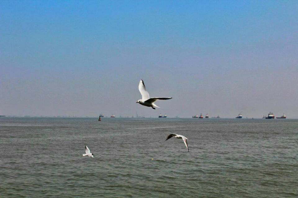 Elephanta Caves ferry - Voyager In The Arabian Sea 17- The Azure Sky Follows - Elephanta Islands - Tania Mukherjee - seagulls
