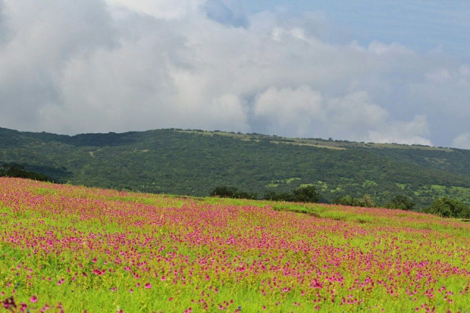 216 Kas Pathar Satara - Maharashtra - India - Mumbai daytrip - Mumbai Weekend - Satara - Unesco - Valley of flowers - Travel - Azure Sky Follows