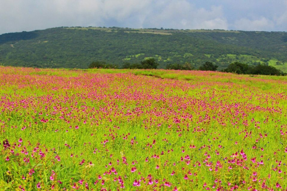 219 Kas Pathar Satara - Maharashtra - India - Mumbai daytrip - Mumbai Weekend - Satara - Unesco - Valley of flowers - Travel - Azure Sky Follows