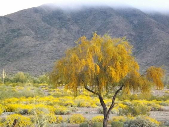 SouthMountain-fog-yellow