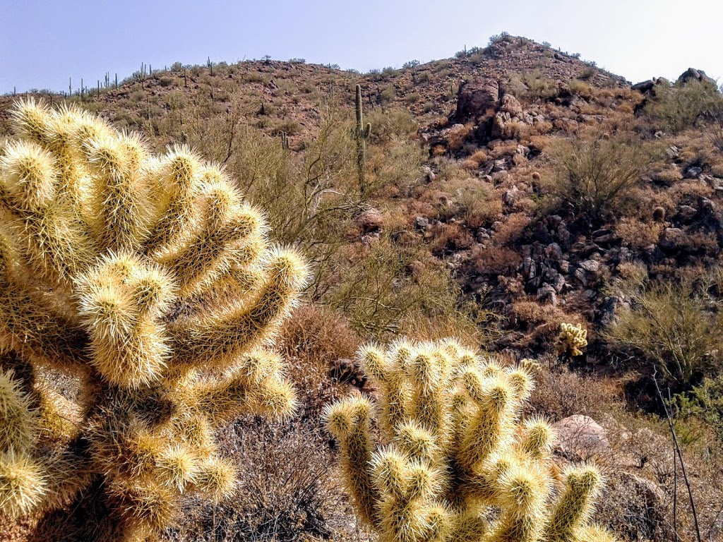 image of two teddy bear jumping chollas