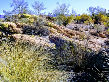 Native and ornamental grasses accent Boyce Thompson Arboretum's rocky desert landscape.