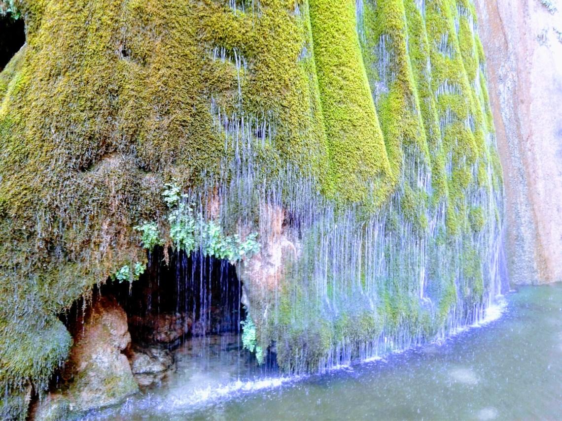 Water trickles through moss-like plants near base of Ribbon Falls