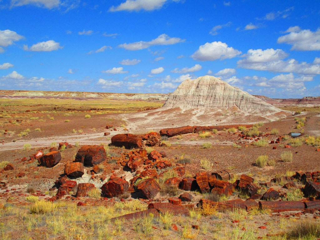 petrified wood in foreground, mound of colorful soil in the background