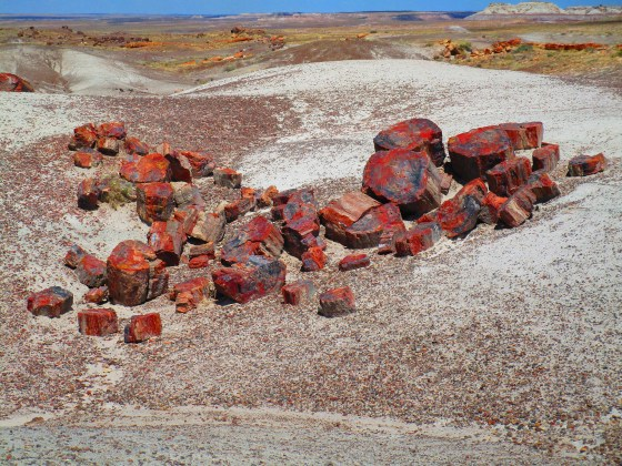 Large pieces of petrified trees lie in pieces in a section of Arizona's Painted Desert